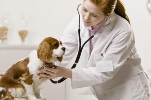 Реклама ветеринарных услуг